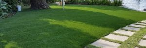 Grassy Dramas 300x100 Grassy Dramas! How to have the best Lawn in the street